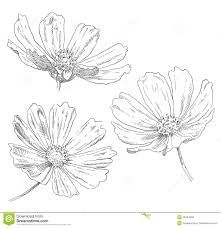 Image result for drawing flowers
