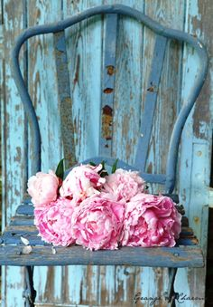 Old chair and roses