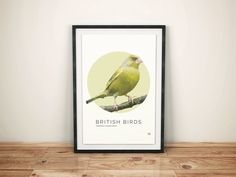British Birds - Greenfinch Illustration | Pretty Limits - Limited Edition Prints for the Home