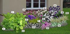 27 pflanzen in 9 sorten stauden bakker ideen rund. Black Bedroom Furniture Sets. Home Design Ideas