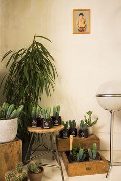 Pflanzenecke für Pflanzenliebhaber #pflanzenfreude #vitaminpshop