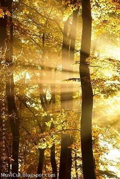 Golden sunshine in nature Beautiful World, Beautiful Places, Beautiful Pictures, Pretty Images, Foto Picture, Beau Site, Sun Rays, Tree Forest, Mellow Yellow
