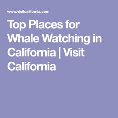Top Places for Whale Watching in California | Visit California