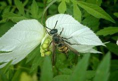 Abejorro en una flor silvestre
