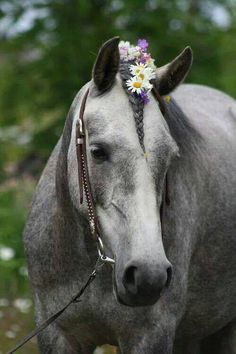 horse mane braid ToniK ❀Flowers in their coats❀ All The Pretty Horses, Beautiful Horses, Animals Beautiful, Cute Animals, Horses And Dogs, Cute Horses, Horse Love, Gray Horse, Horse Mane Braids