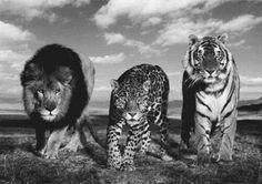Wild kitties