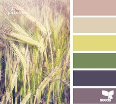 Guest room color palette
