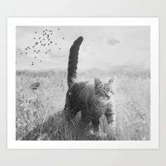 theCat - $13