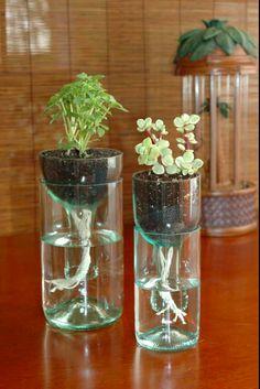 Façon originale de faire pousser les plantes