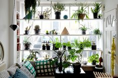 """""""I created the plant window from scaffolding planks painted white [strong enough to hold a lot of weight]. It serves two purposes, one providing a natural screen from the street-level window, so affording a level of privacy, and secondly the abundance of foliage really helps soften what is a very urban location."""""""