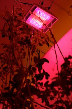 HPS lamp www. Led, Hydroponics, Horticulture, Save Energy, Ultra Violet, Sustainability, Innovation, Lighting, Resin