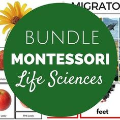 Thank you for your interest in my Montessori Life Sciences Pack! There are 14 sets of materials (over 75 pages!)  in this download including Montessori three key lessons:Living / Non-LivingPlant / AnimalInvertebrates / VertebratesFruit & Vegetable SortTypes of AntsParts of the AntTypes of CowsTypes of ApplesTypes of BearTypes of EyesMigrators, Hibernators, and Adaptors SortTypes of SpidersTypes of StemsParts of the TurkeyI created the sorting activities as shelf work to be used either st...