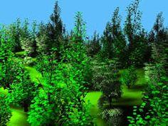© INRIA - GRAVIR / Projet iMAGIS - Simulation de la croissance des plantes et de leur réaction à leur environnement lumineux