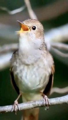 Funny Birds, Cute Birds, Pretty Birds, Cute Funny Animals, Cute Baby Animals, Beautiful Birds, Animals Beautiful, Exotic Birds, Colorful Birds