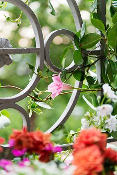 ☆gates and fences Garden Doors, Garden Gates, Pretty Flowers, Colorful Flowers, Iron Art, Beautiful Gardens, Spring Time, Gardening Tips, Flower Colour
