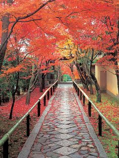 autumn in Kyoto ,Japan