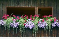 40 Window and Balcony Flower Box Ideas (PHOTOS) Nothing dresses up a window or balcony like flower boxes. Check out these 40 stunning flower and balcony flower box arrangements. Balcony Planters, Window Planter Boxes, Garden Planters, Box Garden, Railing Planter Boxes, Green Garden, Planter Ideas, Flower Boxes For Railings, Geranium Planters