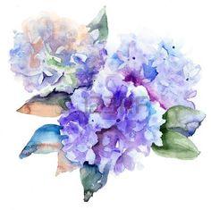Bella Ortensia fiori blu, illustrazione acquerello photo