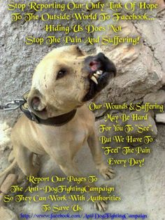 Report Dog Fighting. Pkease be their voice and help end this tyoe of injustice. PLEASE SHARE.