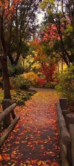 Photo: Bridge in Fall Leaves by Karen McClintock (Woodward Park, Fresno, CA).