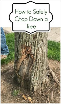Chopping down a dead tree? Make sure to cut down the tree safely.