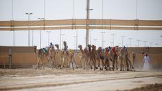 Camel Race Track in Doha.