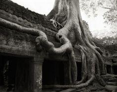 Homenaje a los árboles más majestuosos de la tierra