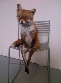 Image result for fox in chair meme