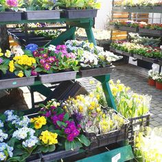 I passed by a flower shop.... #spring #nature #flowers #sunshine #goodday