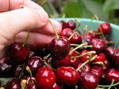 Cherries, Fruit, Food, Gastronomia, Old Recipes, Maraschino Cherries, Cherry Fruit, Essen, Meals