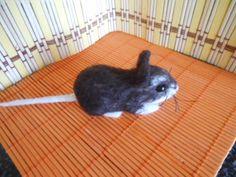 Plstěná hnědá myš