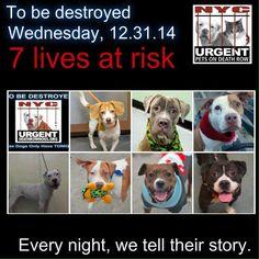 7 DOG BABIES SCH TO DIE WEDNESDAY 12/31. PLS PRAY, RT, PLEDGE IF U CAN, FOSTER OR ADOPT.  https://www.facebook.com/media/set/?set=a.611290788883804.1073741851.152876678058553&type=3&__tn__=%2As….