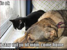 Funny Dogs | Cute and funny dogs, pictures, images, wallpapers.