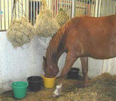 Horses choose multiple forages in different locations