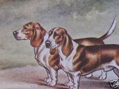 Vintage French Basset Hound Color Dog Print Chromolithograph F. CASTELLAN