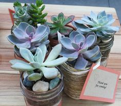 Adorable succulent favors for bridal shower guests