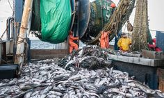 We knew fish catches were too high. But it's much worse than we thought | Callum Roberts