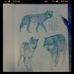 I really like to draw wolves . Wolf Illustration, Artist Journal, Moleskine, Werewolf, Cool Artwork, Sketchbooks, Cool Drawings, Wolves, Painting & Drawing