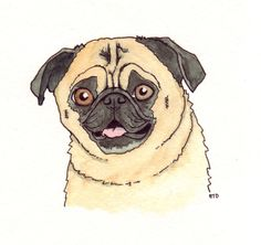 Portrait of Payton the pug (#3). Fountain pen and watercolors. April 20, 2012.