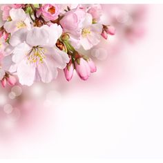 Find Spring Flowers Background Pink Blossom stock images in HD and millions of other royalty-free stock photos, illustrations and vectors in the Shutterstock collection. Thousands of new, high-quality pictures added every day. Iphone Wallpaper Landscape, Love Wallpaper Backgrounds, E Flowers, Spring Flowers, Background Patterns, Background Images, Beautiful Images, Beautiful Flowers, Background Powerpoint