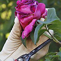Ziergarten: Die besten Gartentipps im Juni