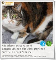 Gänseblümchens Besitzer ist leider verstorben, sodass er ins Tierheim München musste. http://www.tierheimhelden.de/katze/tierheim-muenchen/ekh/gaensebluemchen/13591-1/  Gänseblümchen schmust sehr gerne und möchte ungern alleine bleiben. Sie kann gerne an eine Familie mit ruhigen Kindern vermittelt werden. Wohnungshaltung ist gut denkbar, ein vernetzen