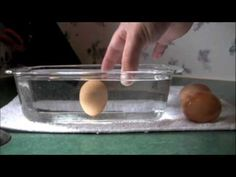 Egg Freshness Water Test! Great way to know if your eggs are fresh or not. Be in the know! #eggs #freshness #test