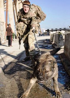 Nothing found for 2013 03 07 Those Cheeky British Military Working Dogs Army Dogs, Police Dogs, Military Working Dogs, Military Dogs, Big Dogs, Dogs And Puppies, Animal Heros, Dog Soldiers, Malinois