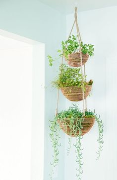This post contains the most inexpensive decorative DIY hanging planters. These planters will definitely make your indoor garden astonishing. Plant Basket, Basket Planters, Indoor Planters, Diy Planters, Planter Ideas, Plants Indoor, Outdoor Plants, Potted Plants, Tiered Fruit Basket