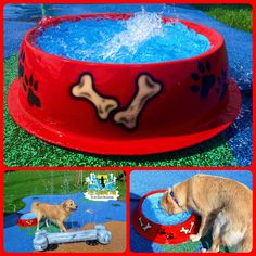 My Splash Pad Dog water park spray ground doggy daycare splashpad pads