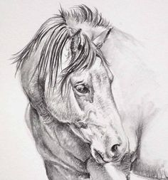 Original Horse Pencil Drawing by JamesSkilesArt on Etsy