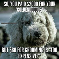 Umm if you pay $60 for doodle groom you're making out like a bandit cos we charge at least $95 to start