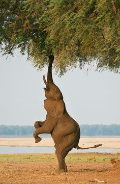 Jetzt weiß ich, warum Elefanten einen Rüssel haben.