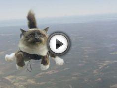 Les chats se mettent au parachutisme dans cette publicité suédoise